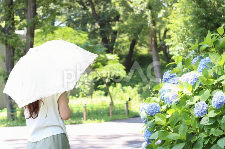 初夏の昼間の写真