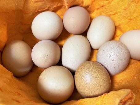 Flat-fed eggs