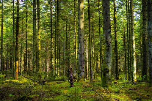 In the mysterious forest of Denmark