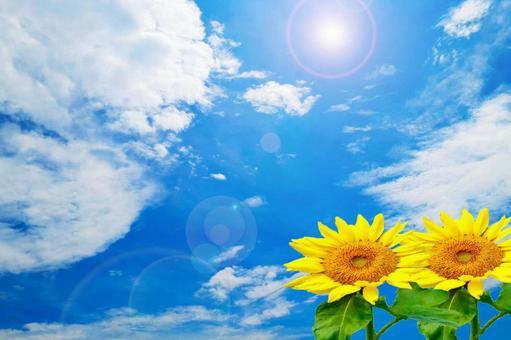 雲朵和向日葵
