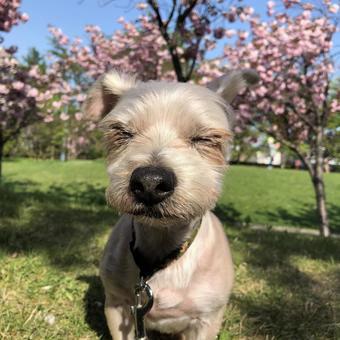 Dog closing eyes