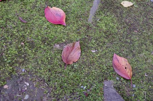 莫斯和落葉