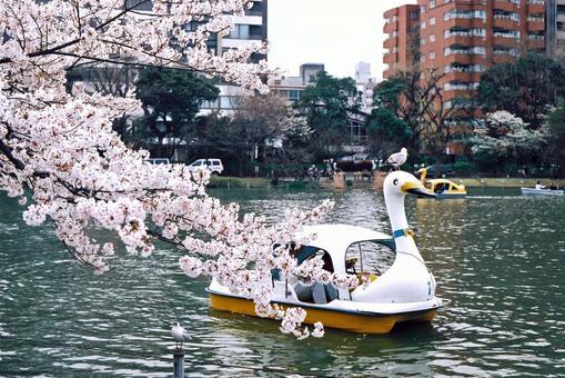 桜 咲 く not endure the pool
