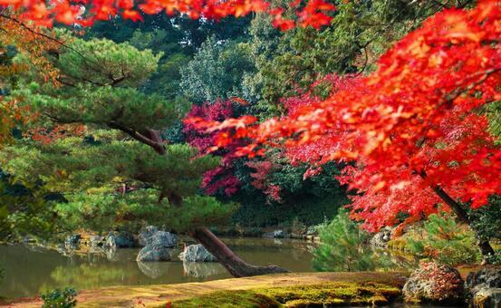葉子盛開在花園裡