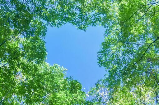 Fresh green sunbeams blue sky