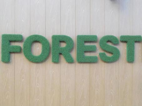 FOREST 이미지