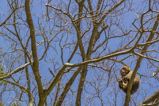 日本猴子和藍天2