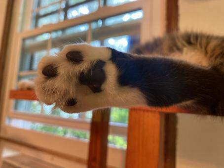 The sole of the cat's paw