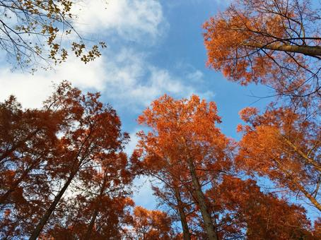 Autumn leaves and sky ②