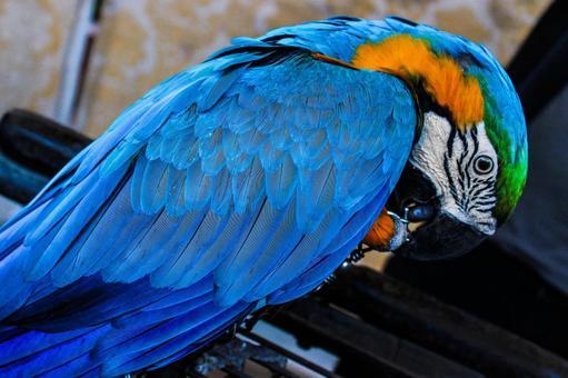 Pakistan Bird 2