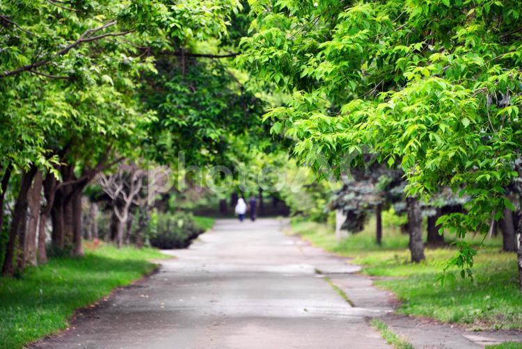 公園の散歩道の写真