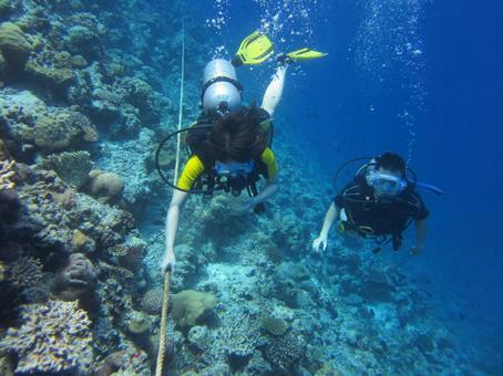 다이빙과 산호초
