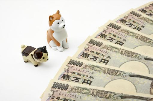 Money with pets