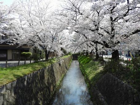 Lake Biwa hydrophobic in spring