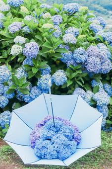 Umbrella with hydrangea ③