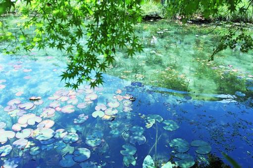 기후현 이타 도리 모네의 연못 11