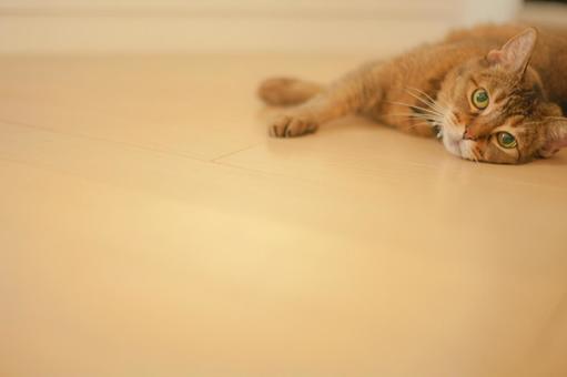 Lying cat 2