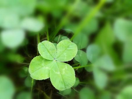 네 잎 클로버 행복