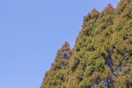 Sugibayashi and blue sky 1