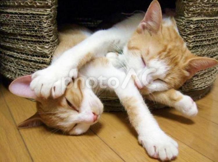 ハウスからはみ出た猫の親子2の写真