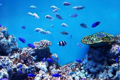 Marine Parknics