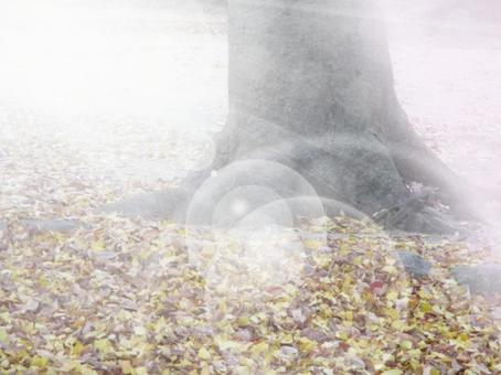 Ginkgo tree and fallen leaves 2