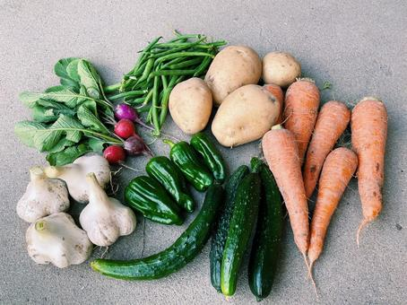 Vegetable group photo