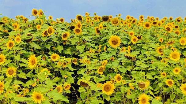 Bright summer image
