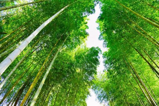 Shuzenji Bamboo Forest 02