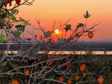 Satoyama autumn persimmon fruit and beautiful sunset