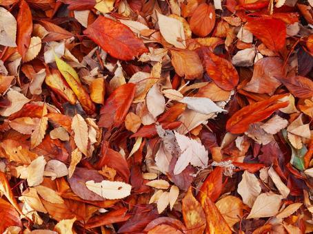 낙엽의 융단
