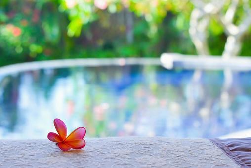 Poolside with plumeria