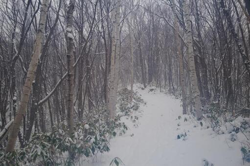 Hiking in the winter forest