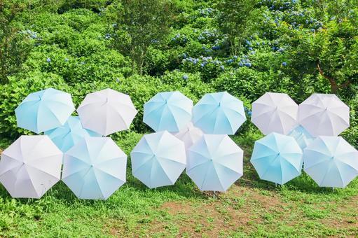 Hydrangea-colored umbrella