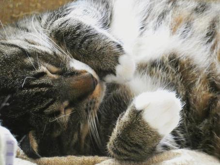 기분 좋은 듯이 잠 고양이
