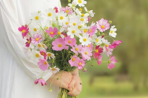 Cosmos bouquet in hand