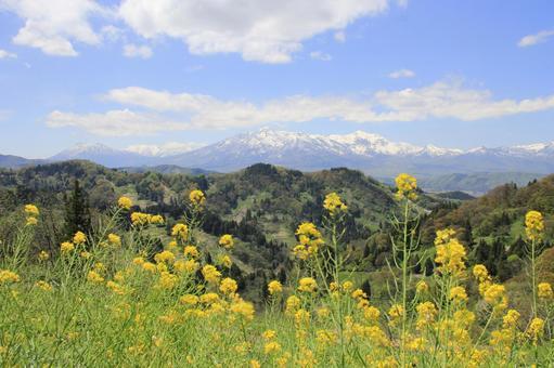 Rape blossoms and Mt. Myoko