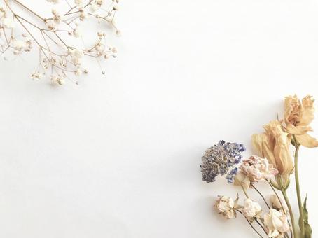 Dried flower 7
