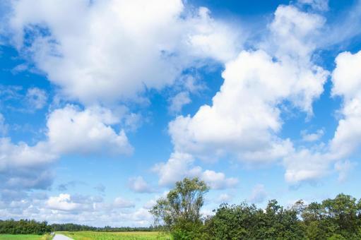 푸른 하늘과 흰 구름 _ 숲과 초원