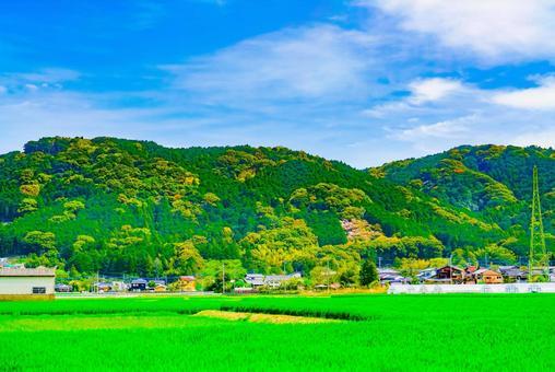 봄의 푸른 하늘과 푸른 보리밭
