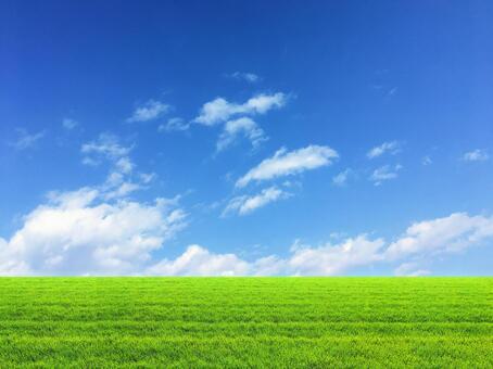 Blue sky in the meadow 2