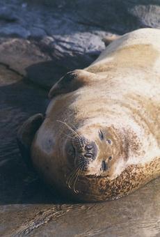 Seal [seal] -003