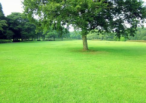 잔디와 나무