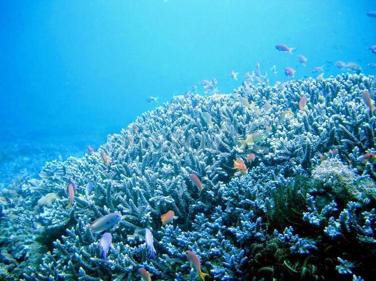 海の生き物 4の写真