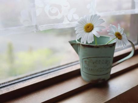 White flowers on the windowsill