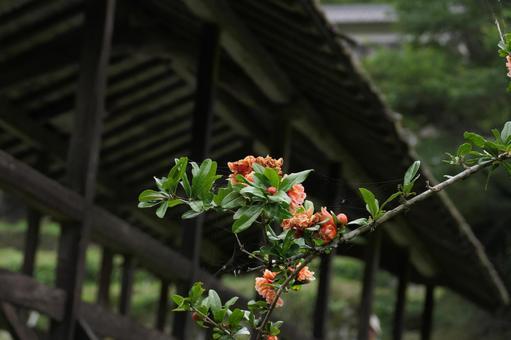石榴與背景的廊橋