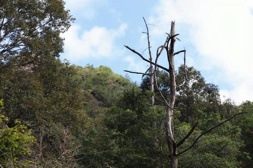 Scenery of Kohoka Nature Park September 2021 (40)