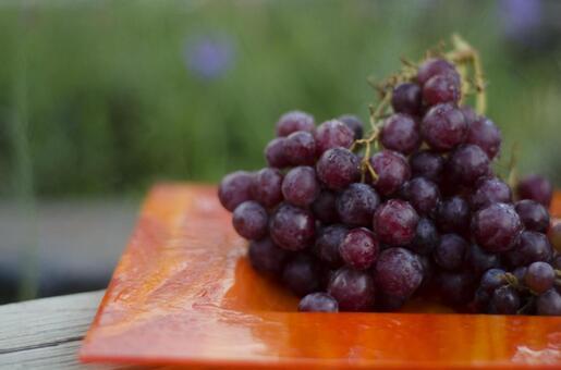 Grape 7