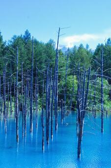 The scenery of Biei is a blue pond