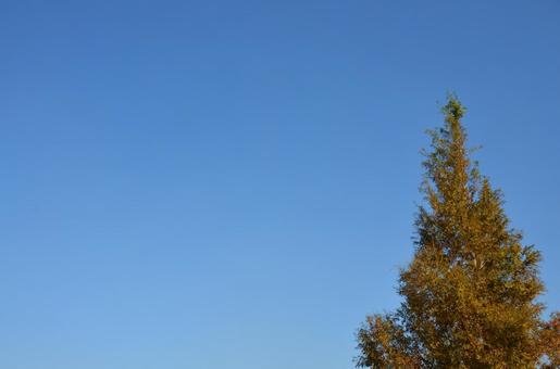 Triangular tree and blue sky